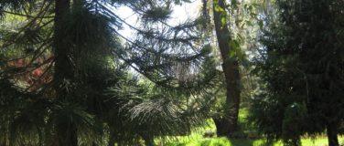 Bosque de Águilas